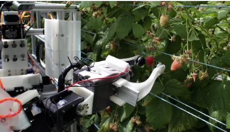 Professor Kevin Curran, Ulster University in an interview on BBC Radio Foyle about a UK fruit picking robot that could replace human pickers. Fieldwork Robotics claim the machine should collect 25,000 raspberries a day, while humans picks 15,000 over 8 hours.